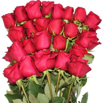 24-Long-stem-red-Roses-Valentine (2)